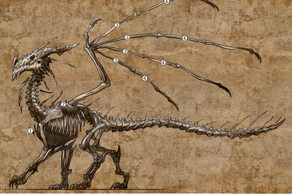 颈部和臀部之间的骨骼-腿和躯干的骨头-某种程度上类似猫科动物的骨骼