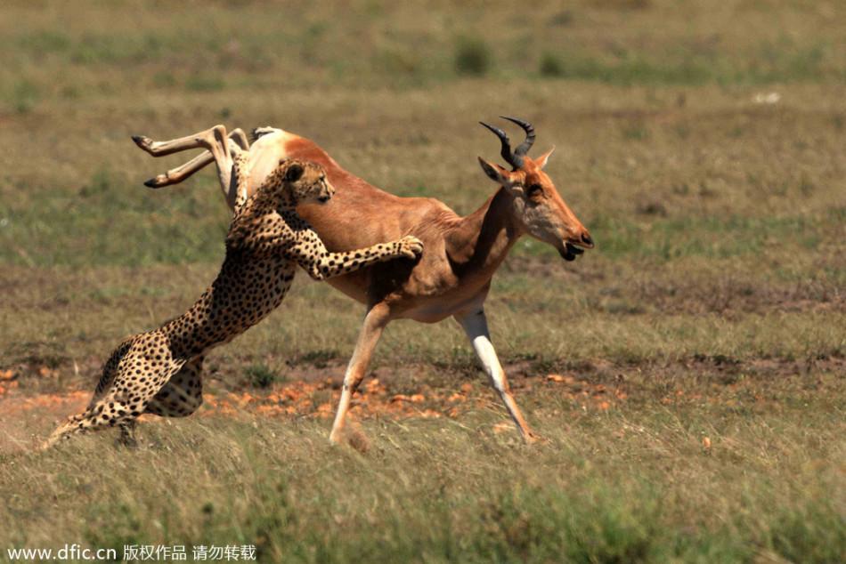 组图:动物界的各种调戏与反杀
