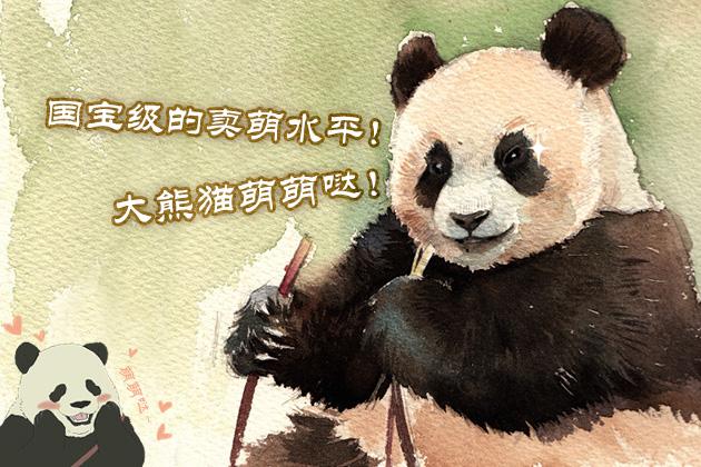 国宝级的卖萌水平!大熊猫萌萌哒!
