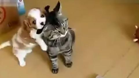 【搬运系列】幼犬猫猫玩咬耳朵的游戏