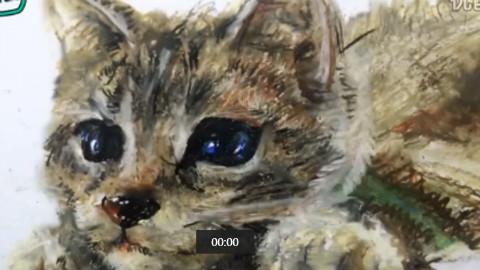 可爱猫手绘 3d立体画