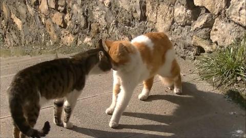 版td猫表情包~坏笑图片