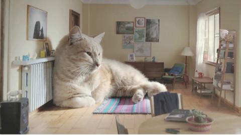 萌宠  超级大猫告诉你,到底有多舒服!