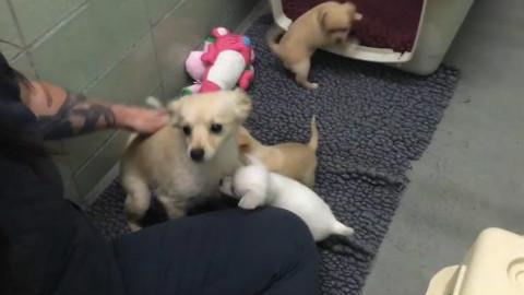 动物组织接收了一只狗狗