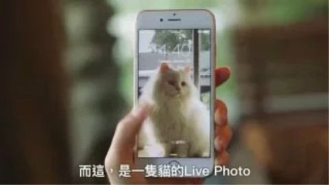 iphone7live photo壁纸