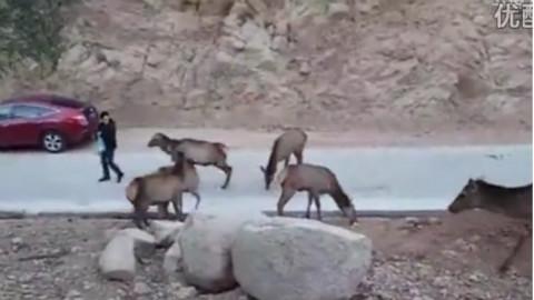 微信头像动物鹿